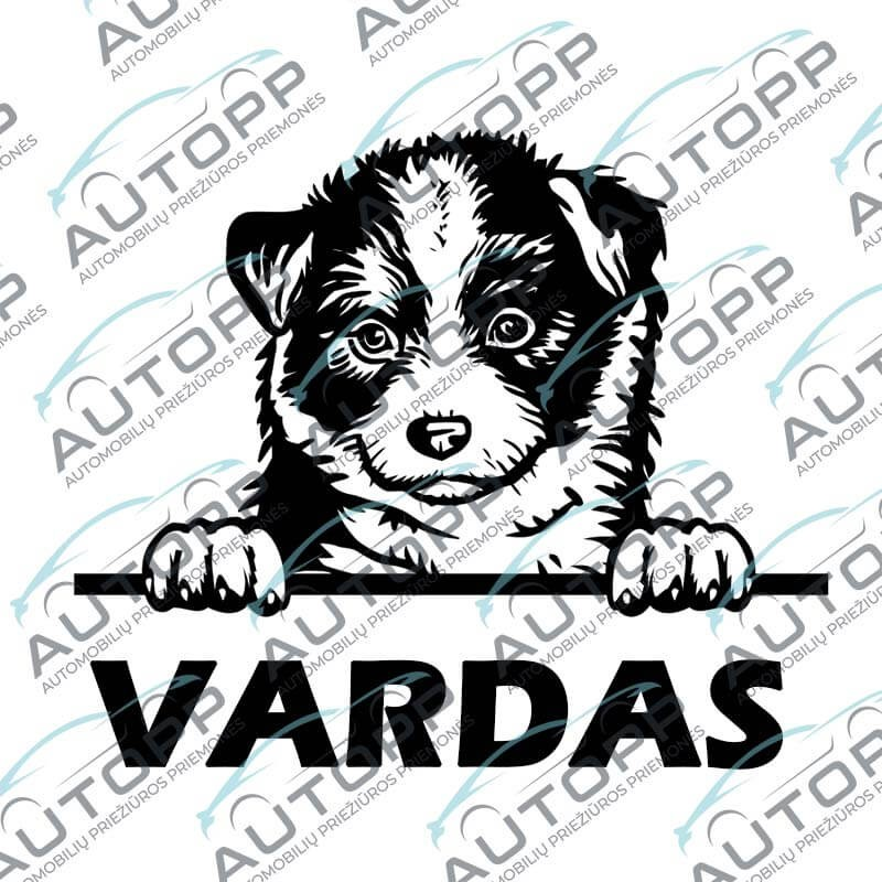 Lipdukas - Australijos Aviganis Šuniukas